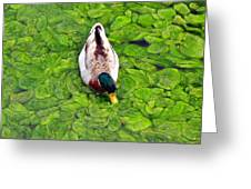 Canadian Duck Greeting Card