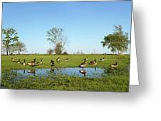 Canadian Geese Community In West Haven Greeting Card
