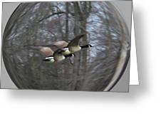 Canadian Geese Flying II Greeting Card