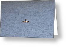 Canadian Geese Love Greeting Card
