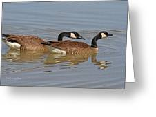 Canadian Geese Mates Greeting Card