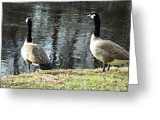 Canadian Geese On Spaulding Pond Greeting Card
