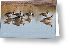 Canadian Geese Stop Over Greeting Card