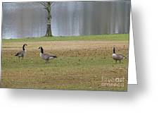 Canadian Geese Tourists Greeting Card