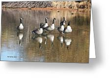 Canadian Geese Watching Greeting Card