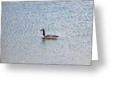 Canadian Goose 2 Greeting Card