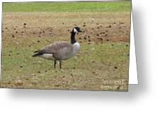 Canadian Goose Strutting  Greeting Card