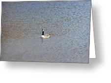 Canadian Goose Greeting Card