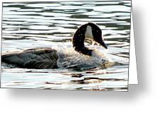 Canadian Goose Wash Greeting Card