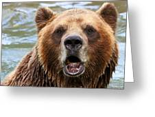 Canadian Grizzly Greeting Card