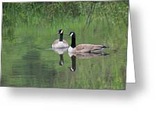 Canadian Lovebirds Greeting Card