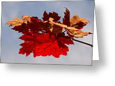 Canadian Maple Leaves In The Fall Greeting Card