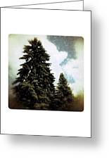 Canadian Pines Greeting Card