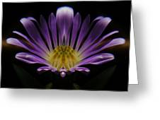 Canadian Purple Wildflower Greeting Card