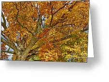Canadian Tree 2012 Greeting Card