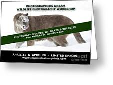 Canadian Wolves Wildcats And Wildlife Photography Workshop Greeting Card
