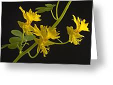 Canary Creeper Greeting Card