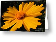Canary Marigold Greeting Card