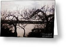 Canaveral Trees I Greeting Card
