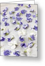 Candied Violets Greeting Card