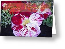 Candy Cane Flower-2 Greeting Card