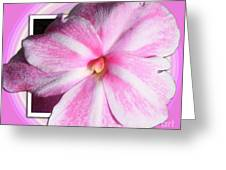 Candy Cane Flower Greeting Card