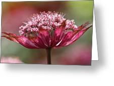 Botanica .. Candy Greeting Card