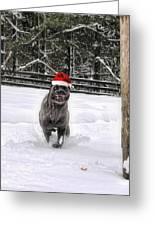 Cane Corso Christmas Greeting Card
