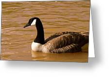 Canidian Goose On Golden Pond Greeting Card
