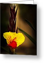 Canna Lily 2 Greeting Card