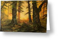 Cannock Chase Forest In Sunlight Greeting Card