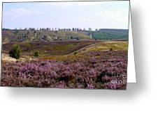 Cannock Chase Heather 4 Greeting Card