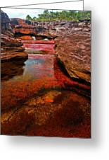 Cano Cristales Greeting Card