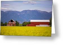 Canola Field Barn Greeting Card
