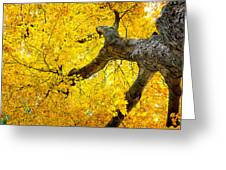 Canopy Of Autumn Leaves Greeting Card