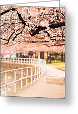 Canopy Of Cherry Blossoms Over A Walking Trail Greeting Card