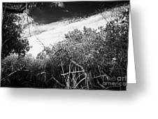 Canopy Of The Mangrove Forest In The Florida Everglades Usa Greeting Card by Joe Fox