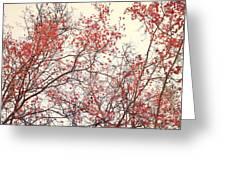 canopy trees II Greeting Card