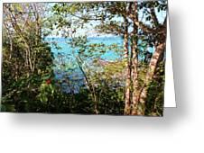 Canopy Vista Greeting Card