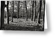 Can't See The Wood For The Trees Greeting Card