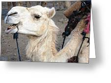 Cant Wait For Hump Day Greeting Card