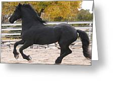 Canter In Spirit Greeting Card by Royal Grove Fine Art