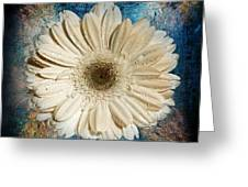 Canvas Still  Greeting Card