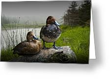 Canvasback Duck Pair By A Pond Greeting Card