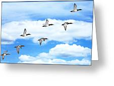 Canvasback Ducks In Flight Greeting Card