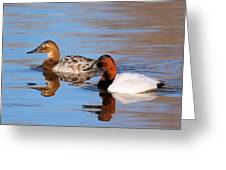 Canvasback Pair Greeting Card