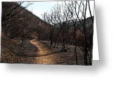 Canyon Covered In Ash Greeting Card
