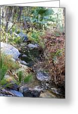 Canyon Creek Greeting Card