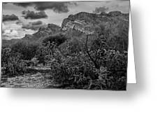 Canyon Del Oro No.48 Greeting Card