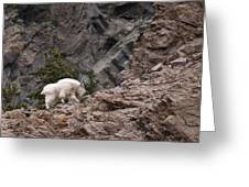 Canyon Goat 1 Greeting Card by Roger Snyder